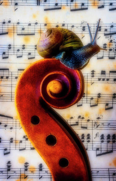 Wall Art - Photograph - Snail With Sheet Music by Garry Gay