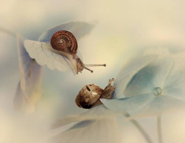 Hydrangea Wall Art - Photograph - Snails by Ellen Van Deelen