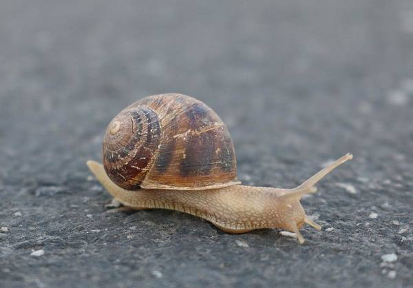 Photograph - Snail's Pace  by Christy Pooschke