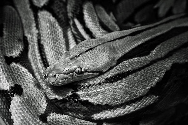 Photograph - Snake by Fine Arts