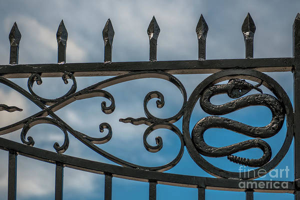 Photograph - Snake Gates By Philip Simmons by Dale Powell