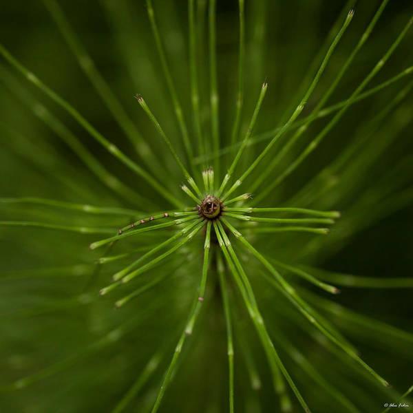 Photograph - Snake Grass by Alexander Fedin