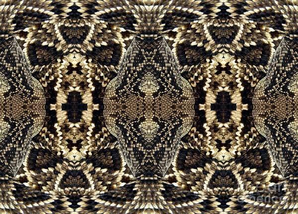 Photograph - Snake Macro Warp Abstract by Rose Santuci-Sofranko