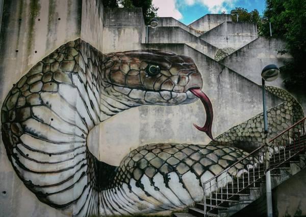 Photograph - Snake Or Cobra Street Art  by Alexandre Rotenberg
