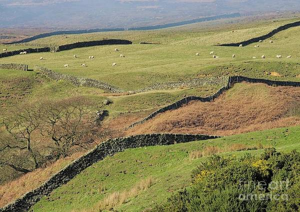 Photograph - Snaking Stone Walls by Martyn Arnold
