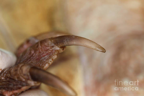 Snapping Wall Art - Photograph - Snapping Turtle Claw by Ted Kinsman