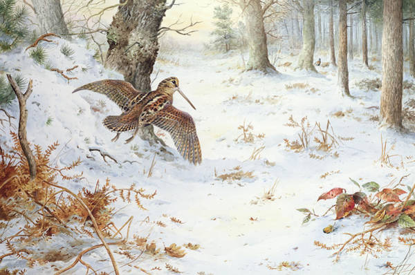 Icy Leaves Wall Art - Painting - Snipe In Wooded Landscape by Carl Donner