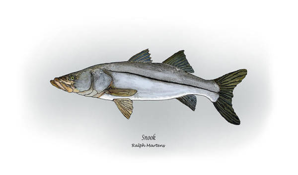 Angling Art Painting - Snook by Ralph Martens