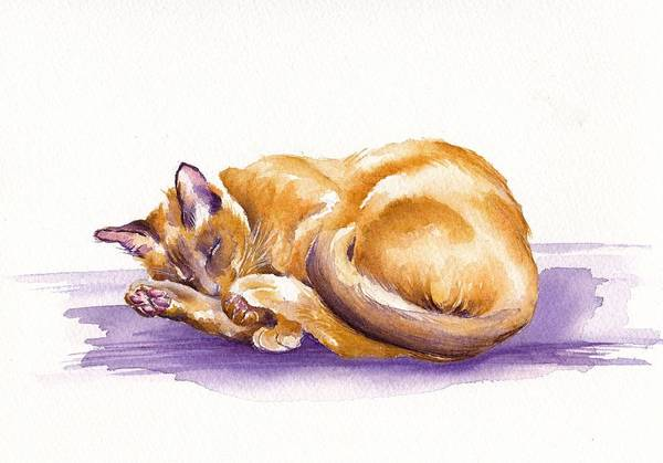 Wall Art - Painting - Snooze by Debra Hall