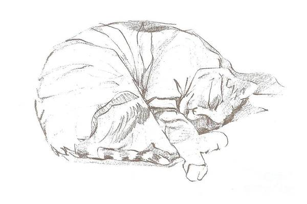 Drawing - Snoozing Kitty by Denise F Fulmer