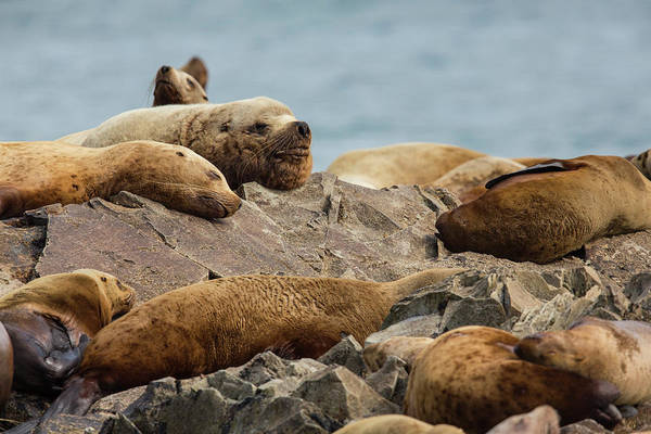 Wall Art - Photograph - Snoozing On The Rocks by Tim Grams