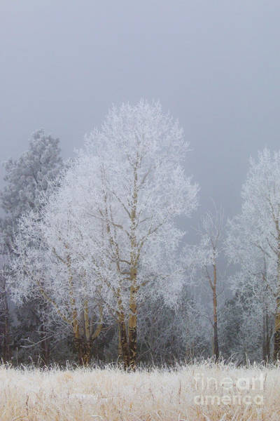 Photograph - Snow And Ice For Thanksgiving On Bald Mountain by Steve Krull
