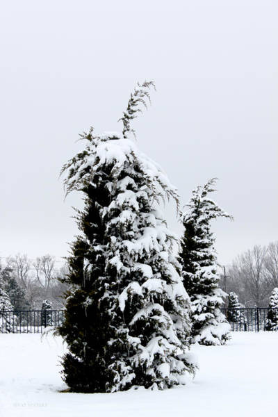 Photograph - Snow And Icicle Covered Tree In The Tulsa Rose Garden by Susan Vineyard