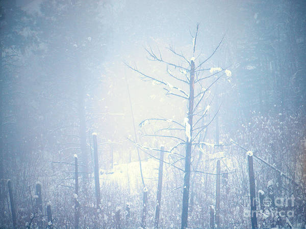 Photograph - Snow And Remnants Of The Fire 2 by Tara Turner