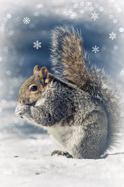 Photograph - Snow And Squirrel by Rima Biswas
