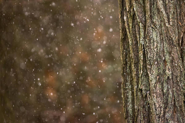 Photograph - Snow And Tree Trunk by Terry DeLuco