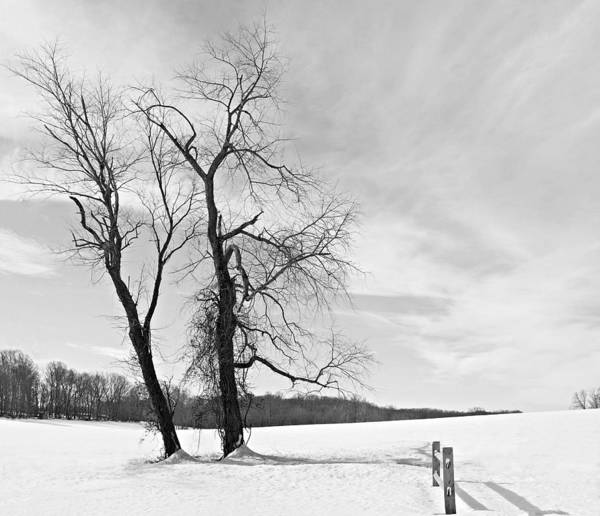 Photograph - Snow And Trees by Richard Reeve