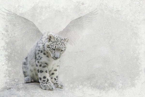 Digital Art - Snow Angel by Nicole Wilde