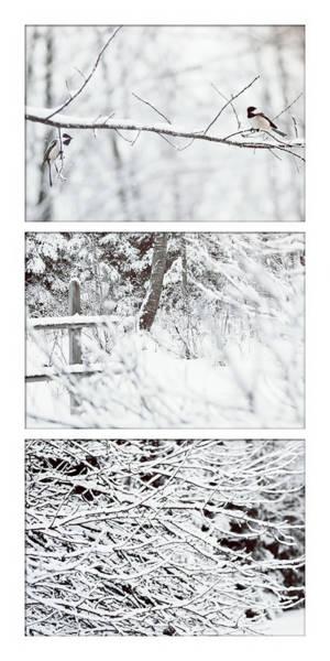 Photograph - Snow Birds by Christina VanGinkel