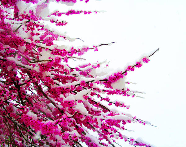 Photograph - Snow Blossoms by Susan Vineyard
