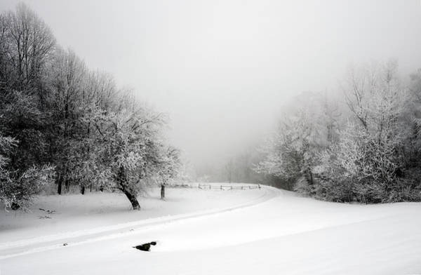 Photograph - Snow Bound by Greg Reed