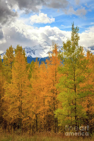 Wall Art - Photograph - Snow Capped Mountains On A Fall Day by Ronda Kimbrow