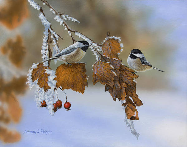 Painting - Snow Chickadees by Anthony J Padgett