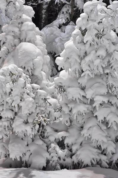 Photograph - Snow Coat by Alex Grichenko