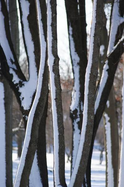 Wall Art - Photograph - Snow Covered by Dahlia Tumavicus