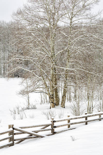 Photograph - Snow-covered by Denise Bush