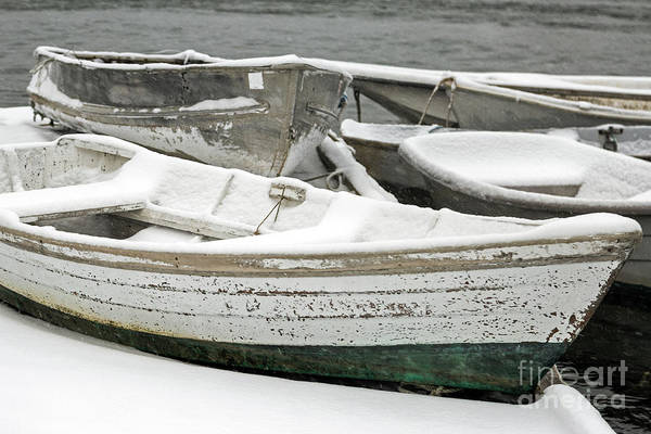 Photograph - Snow Covered Dinghies by Karin Pinkham