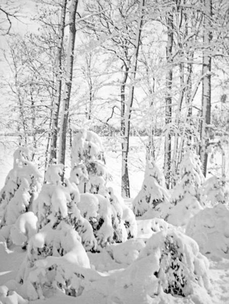 Wintry Photograph - Snow Covered Forest by German School
