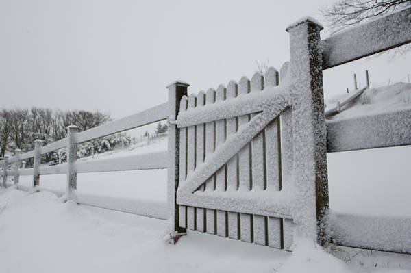 Photograph - Snow Covered Gate by Helen Northcott