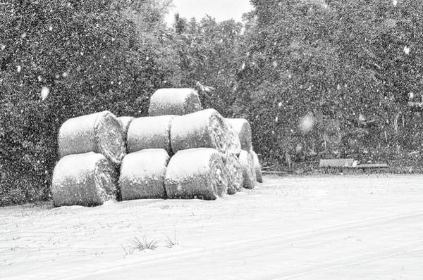 Photograph - Snow Covered Hay Bales by Scott Hansen