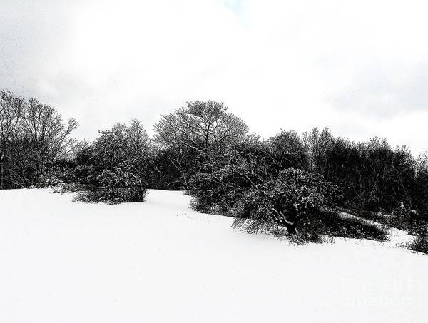 Photograph - Snow Covered Hillside In Western New York With Ink Sketch Effect by Rose Santuci-Sofranko