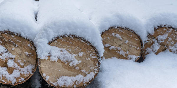 Photograph - Snow Covered Logs by Chris Bordeleau