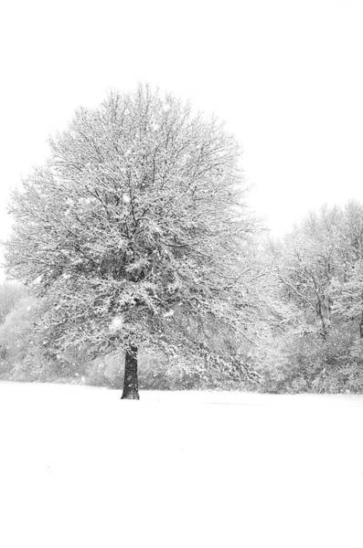Photograph - Snow Covered by Miguel Winterpacht