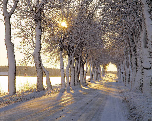Wall Art - Photograph - Snow Covered Road by Panoramic Images