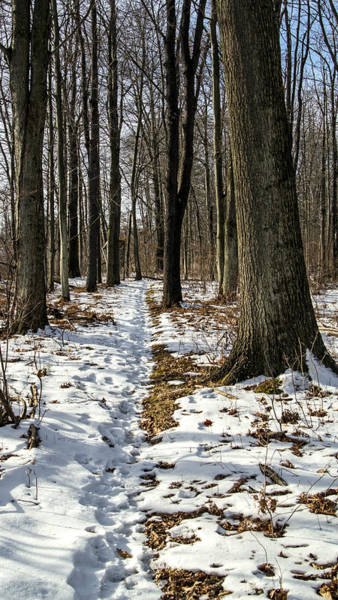 Photograph - Snow Covered Trail by Frank Morales Jr