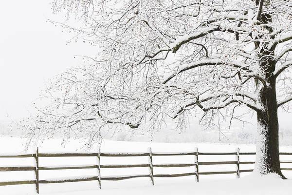Wall Art - Photograph - Snow Covered Tree by Oscar Gutierrez
