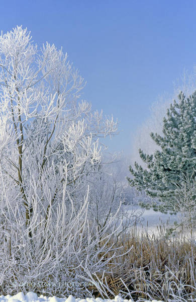 2a357 Snow Covered Trees At Alum Creek State Park Art Print
