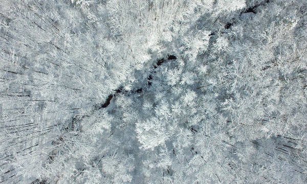 Photograph - Snow-covered Treetops by James Richardson