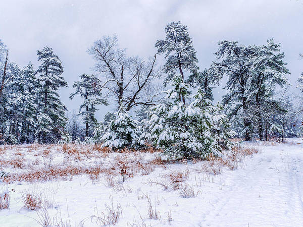 Photograph - Snow Coveredtrees by Louis Dallara