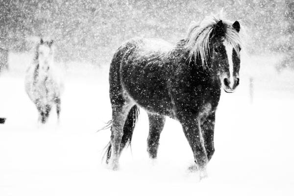 Bailey Photograph - Snow Dance by Mark Courage