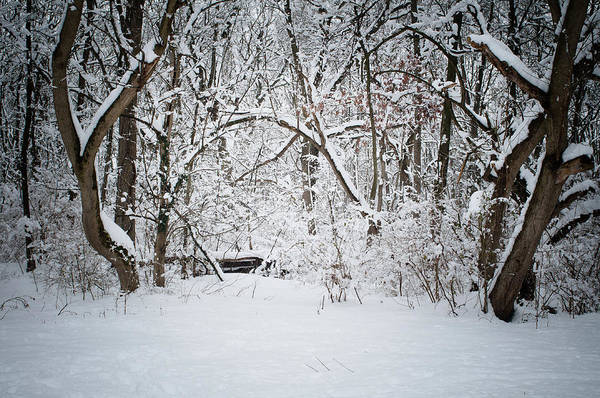 Photograph - Snow Day 1, Fieldwork, Hunter Hill, Hagerstown, Maryland, March 21 by James Oppenheim