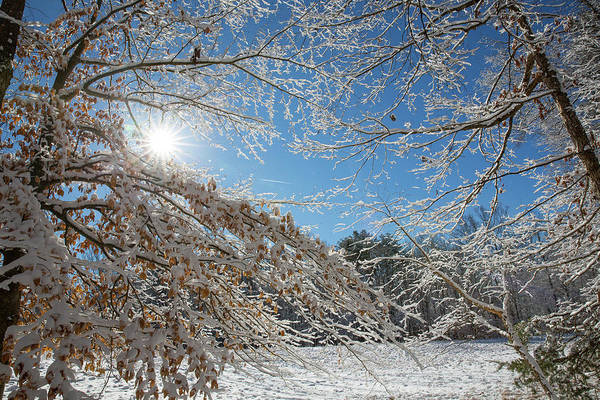 Photograph - Snow Day by Jim Neal