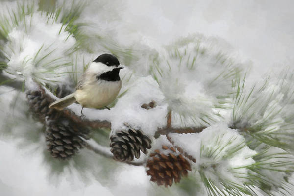 Chickadees Photograph - Snow Day by Lori Deiter