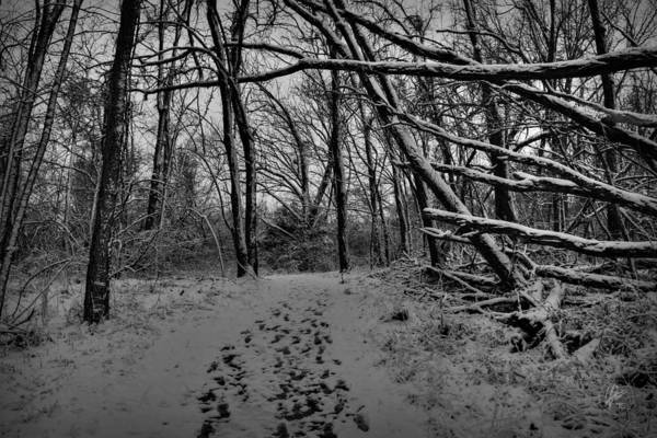 Photograph - Snow Day Walk In The Woods 001 Bw by Lance Vaughn