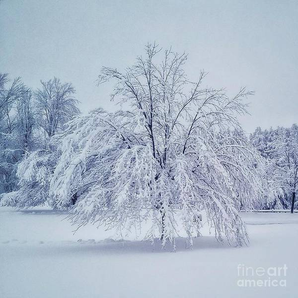 Snow Encrusted Tree Art Print