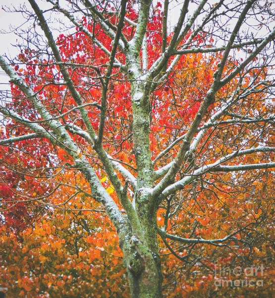 Photograph - Snow Falls 2 by Andrea Anderegg